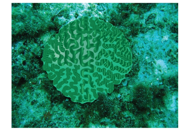 Brain-Coral_12