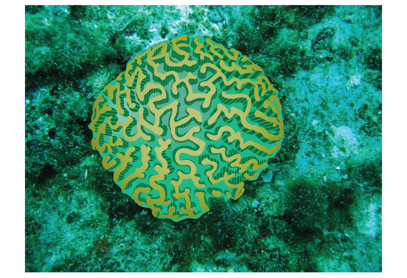 brain coral drawing - photo #12