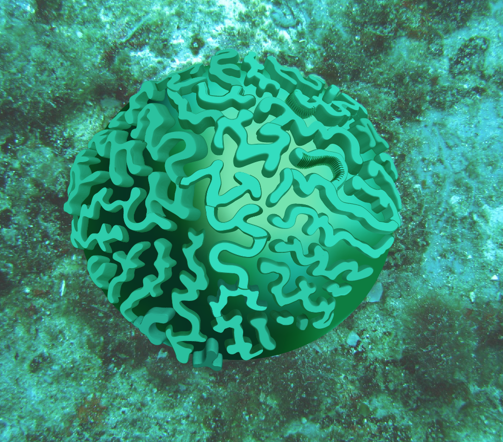brain coral drawing - photo #20