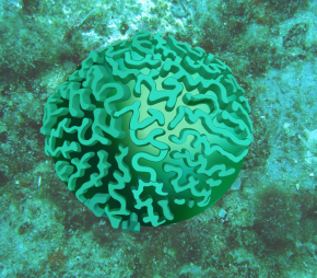 expanding my brain (coral)…