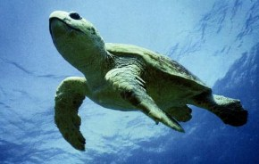 this must be what a tiny loggerhead baby feelslike