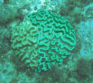 partial coral shape extrusion