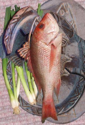 Cubist Fish Still Life_03