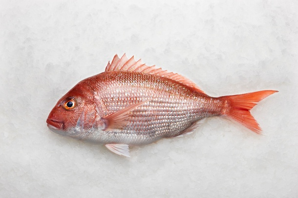Snapper-whole-fish