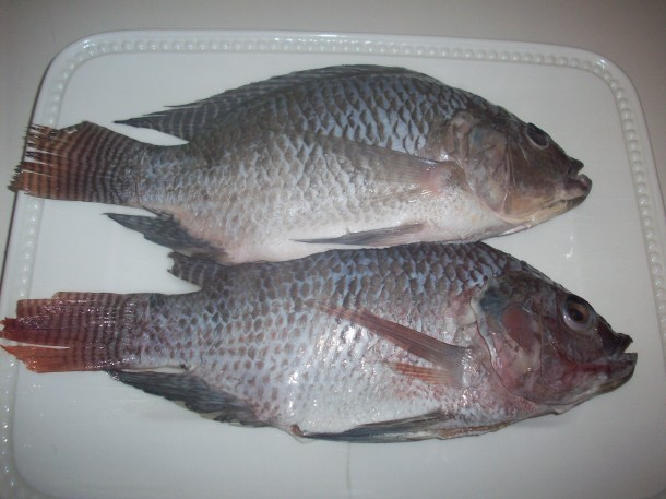 two_whole_fish