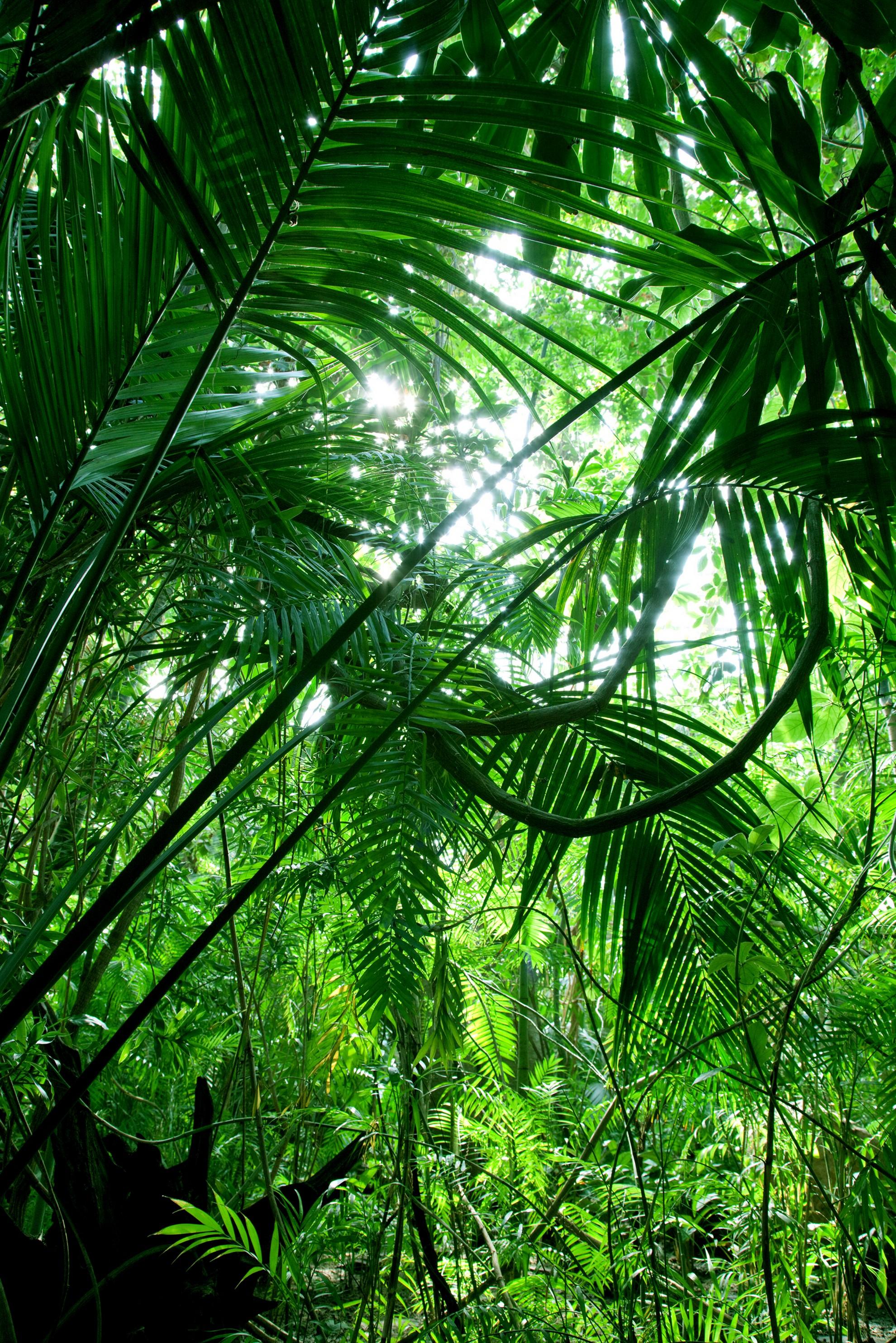 tropical forest background tumblr wwwimgkidcom the